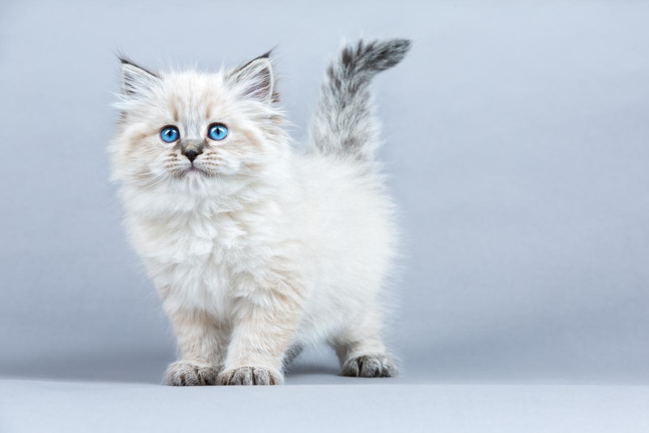 القطط و علاقتها بالمس